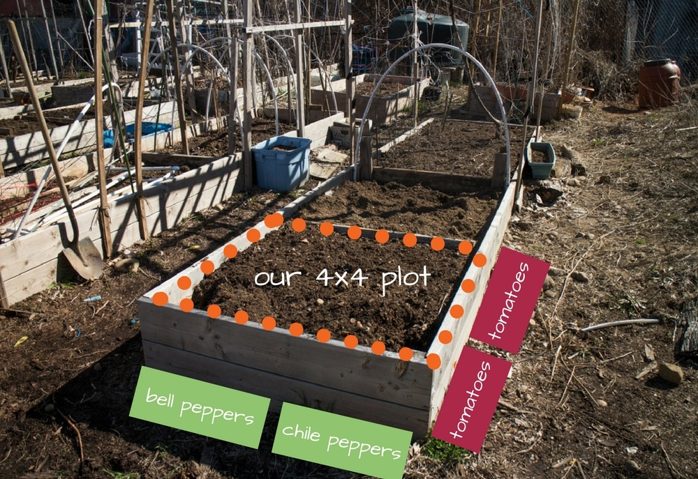 4x4 garden plot