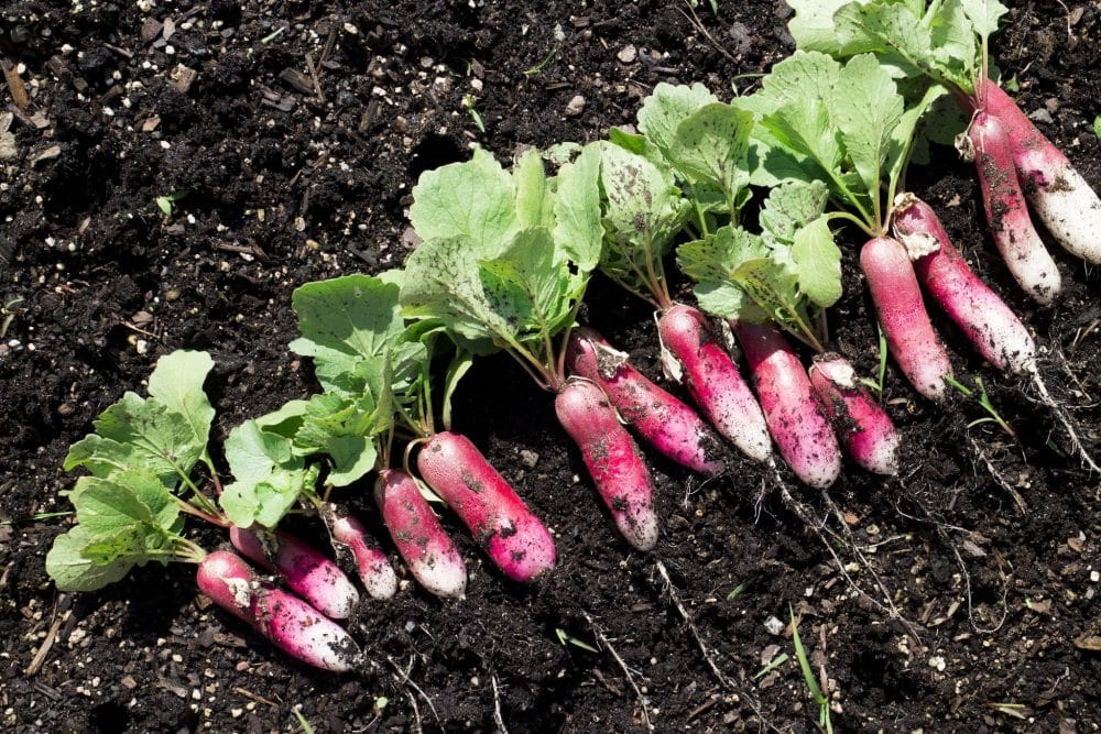 10 EASIEST Vegetables To Grow In The Garden