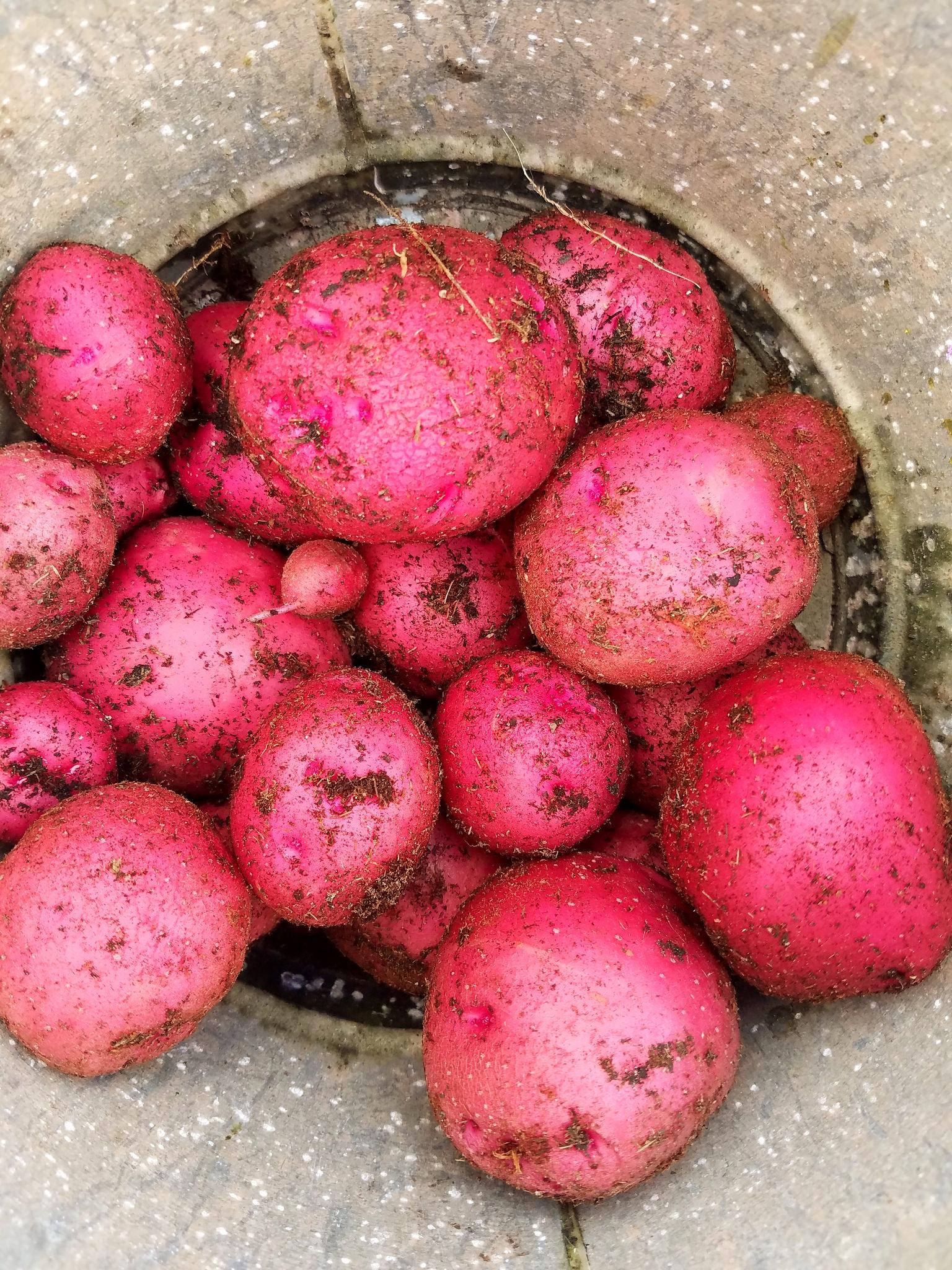 10 EASIEST Vegetables To Grow In Pots