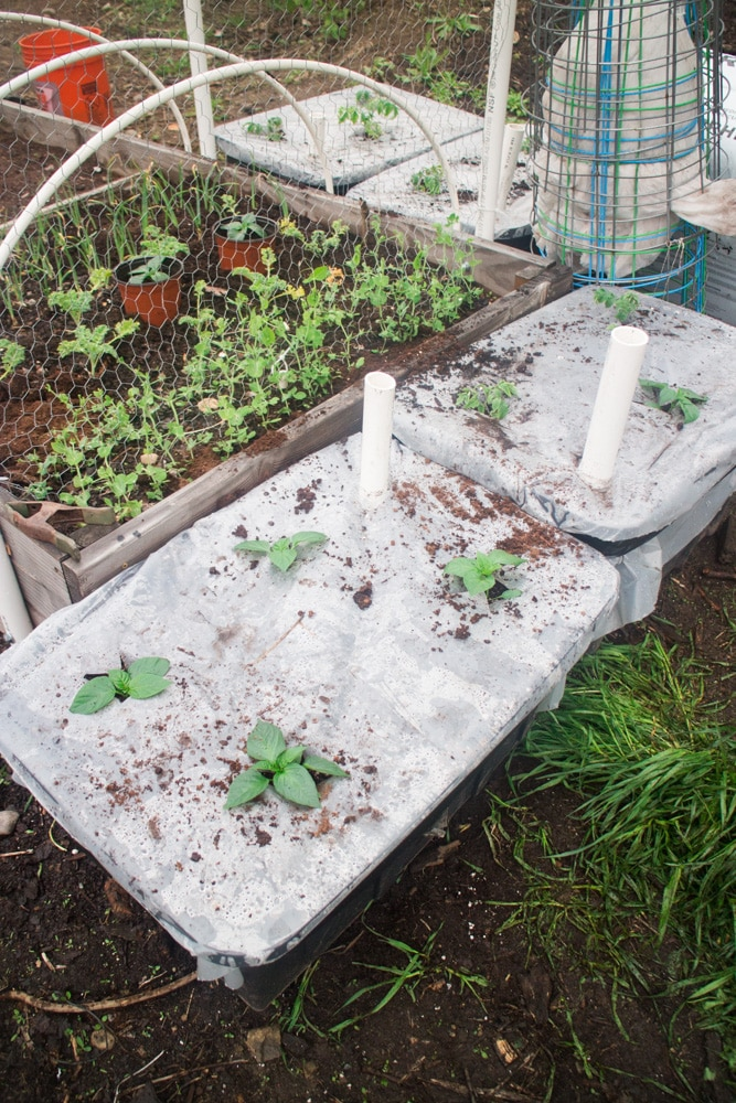 How To Make a Sub Irrigated Planter! We grow HUNDREDS of pounds of vegetables in our planters! Follow these easy DIY step by step instructions on how to make your own container garden. These planters are perfect for gardens of any size, and they're cheap to make!