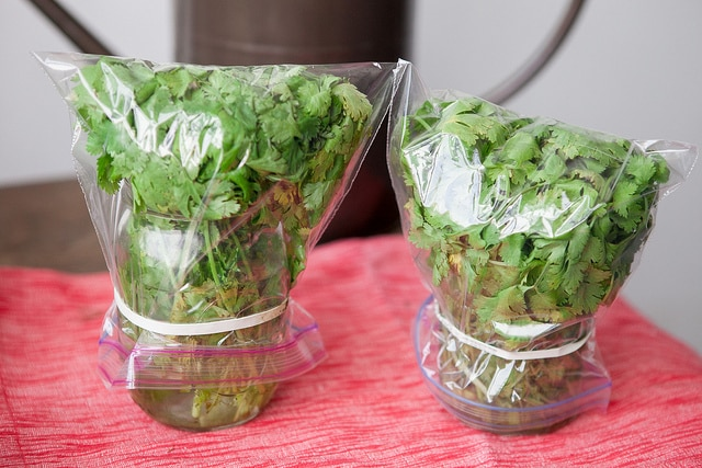 HOW TO STORE CILANTRO to make it last for weeks! This easy trick shows how to store cilantro in water in your refrigerator to last up until 3 weeks! It's the perfect way to keep cilantro fresh for a long time!