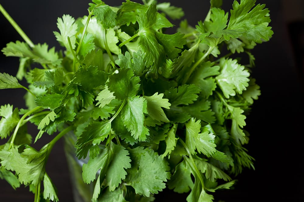 HOW TO STORE CILANTRO to make it last for weeks! This easy trick shows how to keep cilantro fresh in water in your refrigerator to last for 3 weeks! It's the perfect way to store cilantro for a long time!