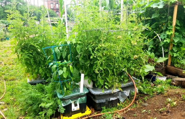 How To Make A Sub Irrigated Planter Make Your Own Container Garden