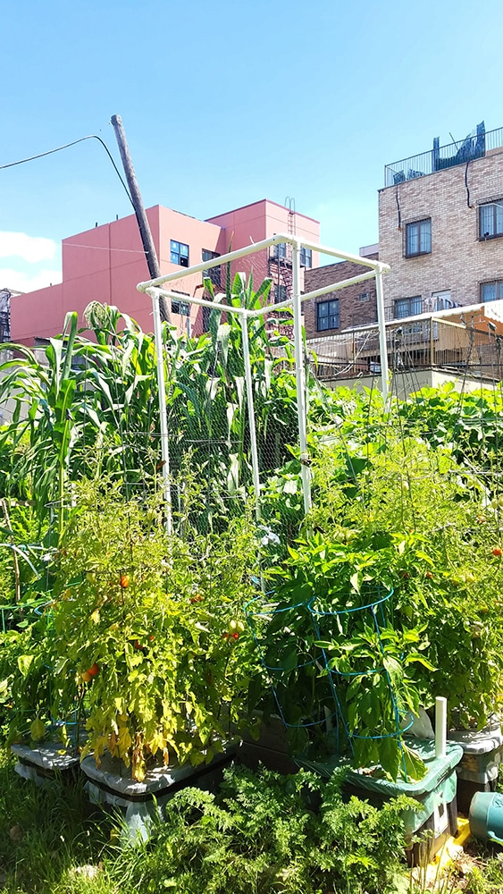 Brooklyn New York Community Garden