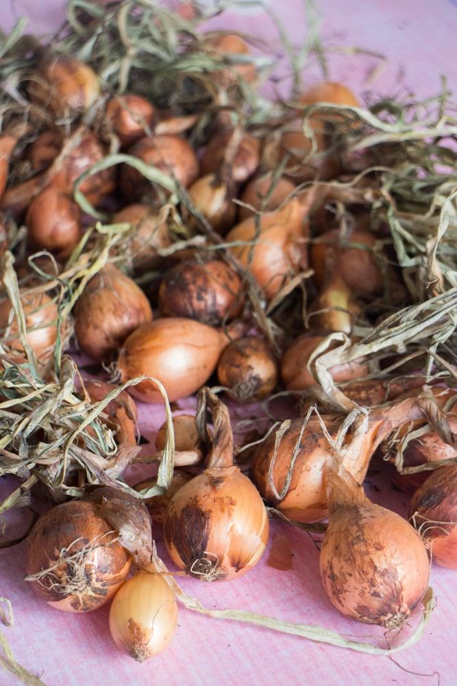 Fresh Garden Onions