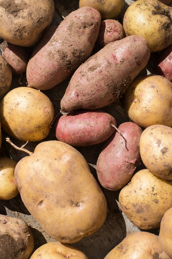 We planted potatoes and didn't do ANYTHING else. We didn't water, didn't mound up, nothing! Learn how to grow potatoes, and how many pounds of potatoes we had waiting for us!