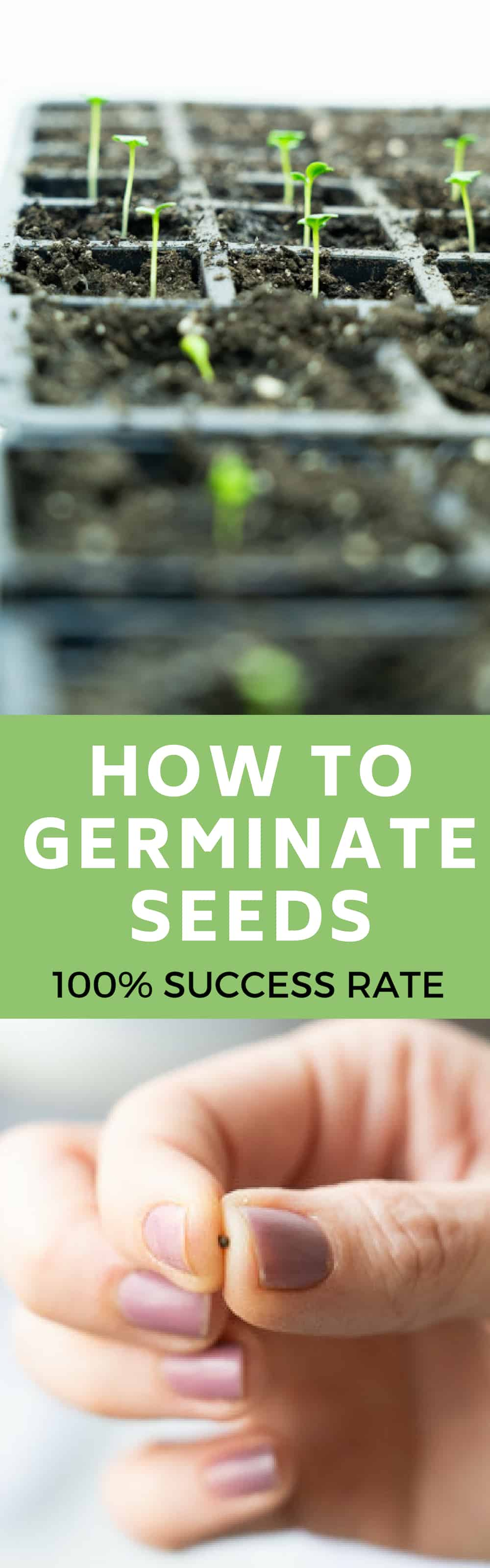 We use a heat mat and thermometer to germinate our vegetable garden seeds.  Find out how we use these tools to get a 100% germination rate. This saves time and ensures reliable sprouting.