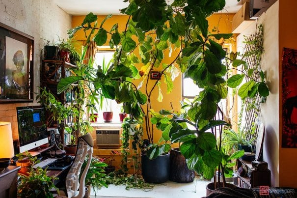 Need some inspiration for growing plants indoors?  Check out Summer Rayne Oakes's  NYC apartment - it's a real jungle!