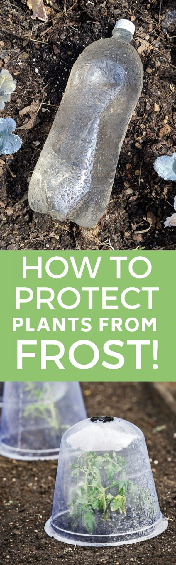 Easy DIY tips to protect your plants from frost and cold. Learn how to harden off your plants, use bottles for heat and cover your vegetables.