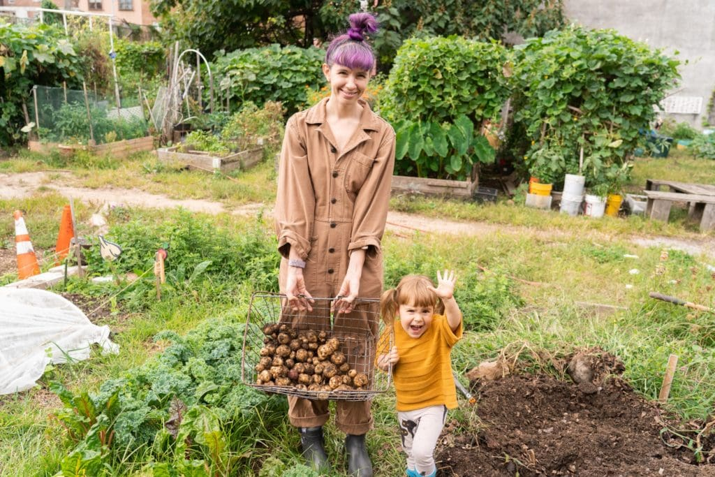 little girl and mom in garden digging up potatoes
