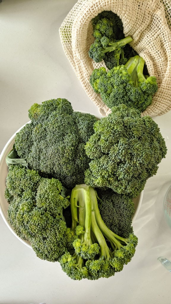 fresh broccoli picked from garden in bowl