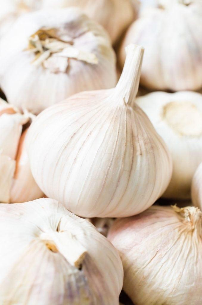 fresh garlic head