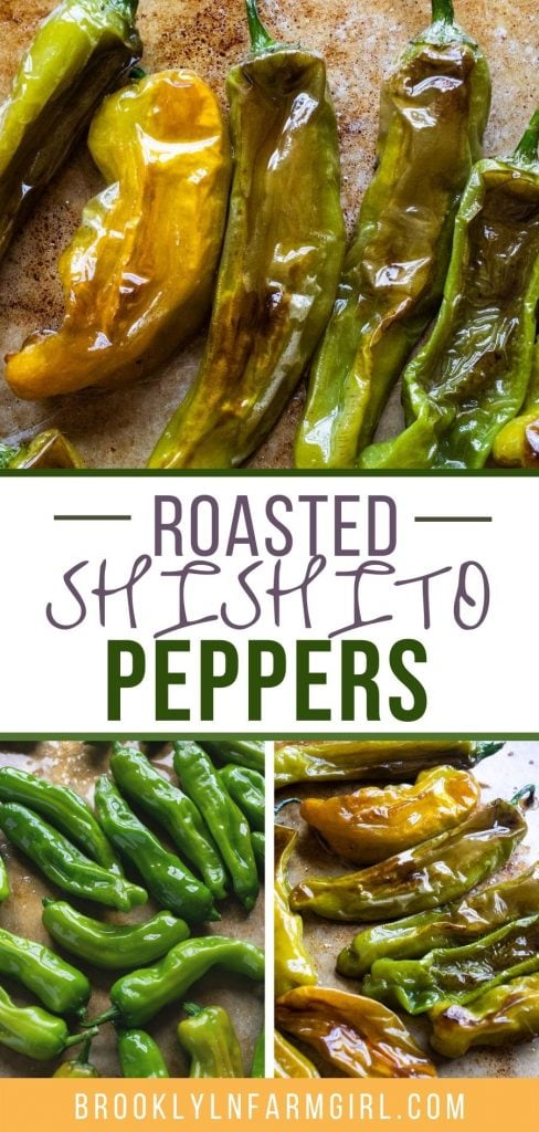 Oven roasted shishito peppers recipe ready in 10 minutes.  These blistered peppers are great for a healthy side dish or snacking!