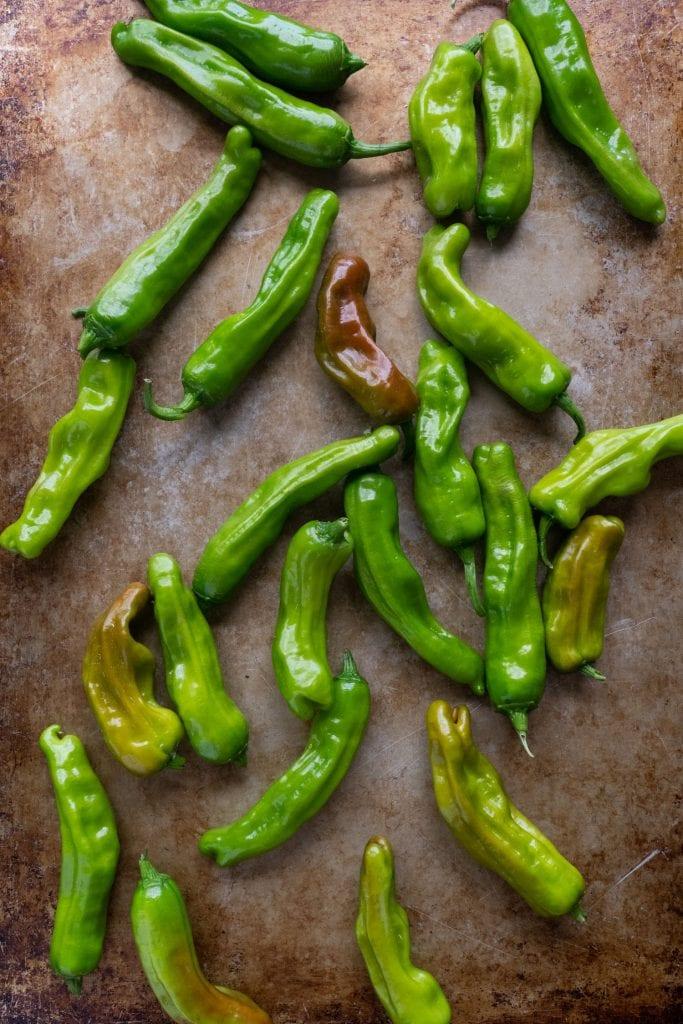 fresh  whole shishito peppers on baking sheet