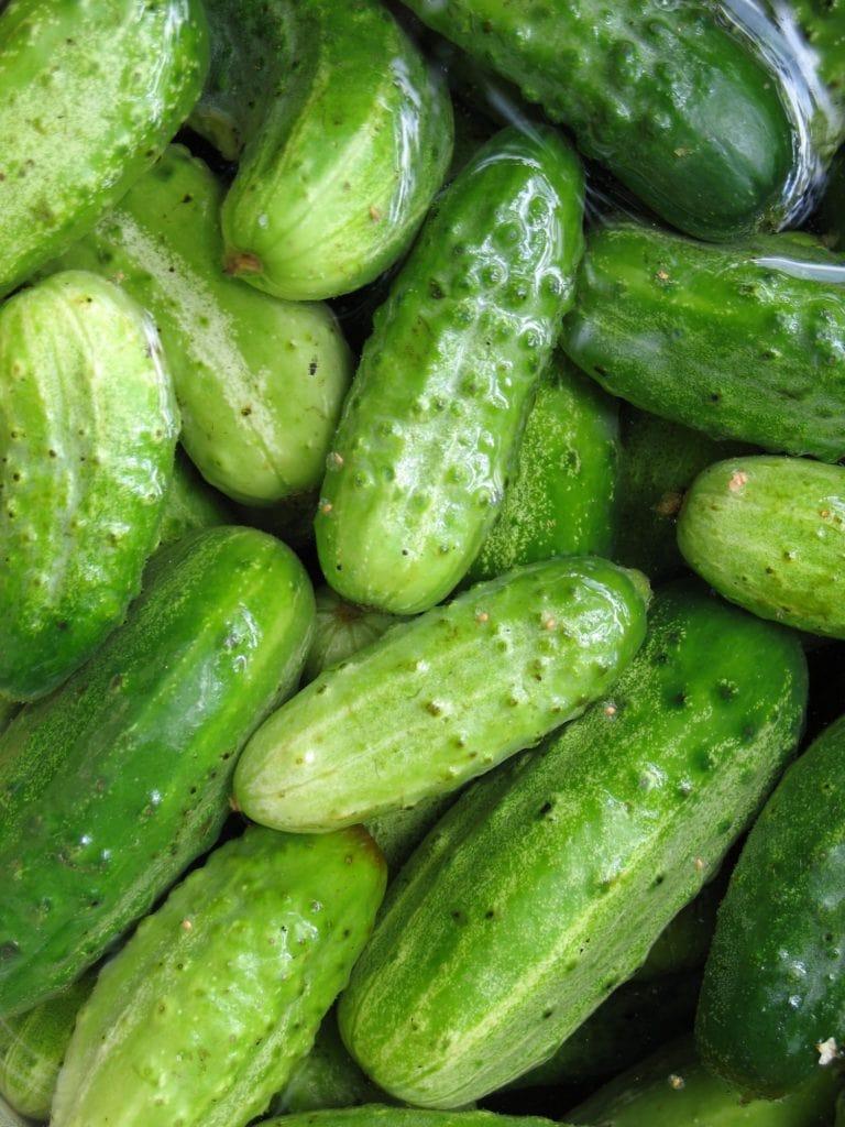 washed cucumbers