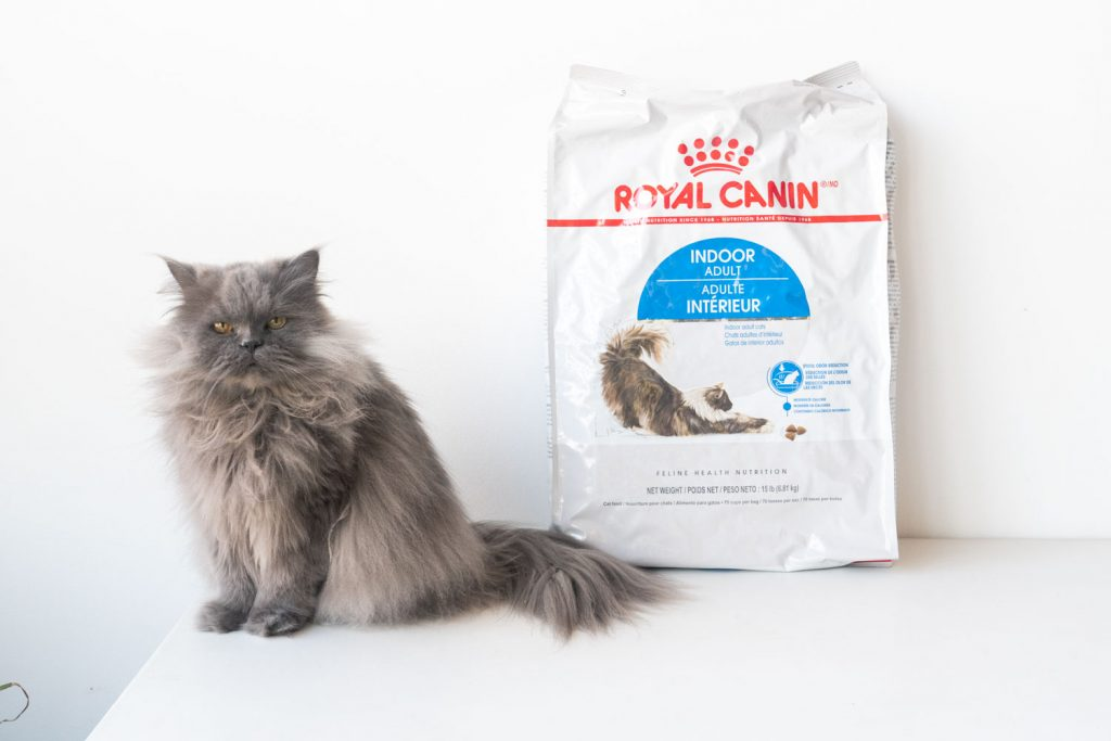 persian cat on white background with royal canin bag of food