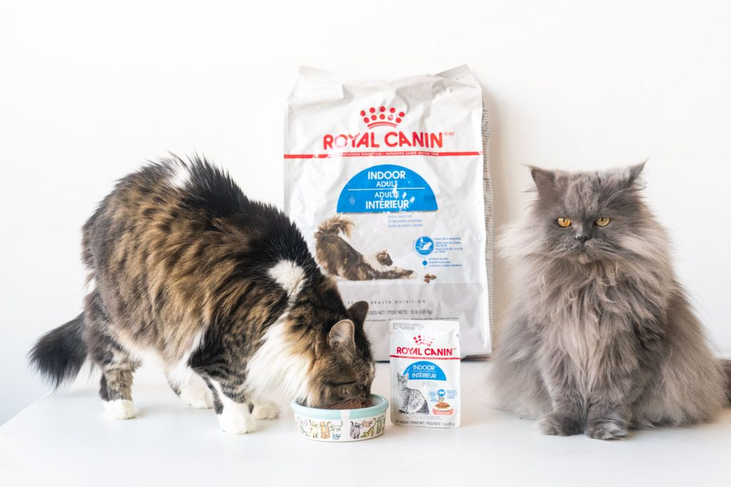 2 cats on white background with royal canin cat food in bag and bowl