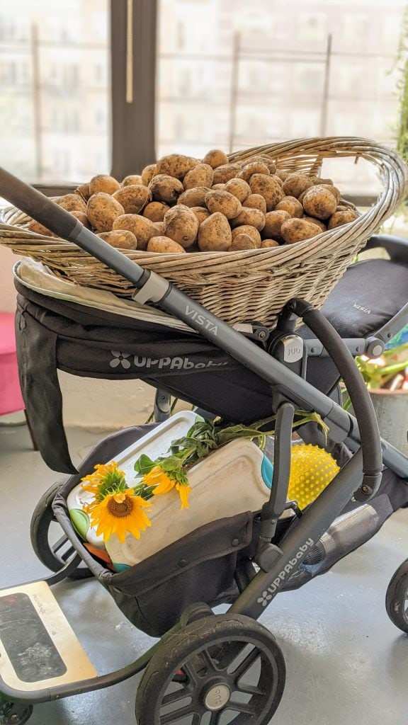 uppababy vista stroller carrying potatoes