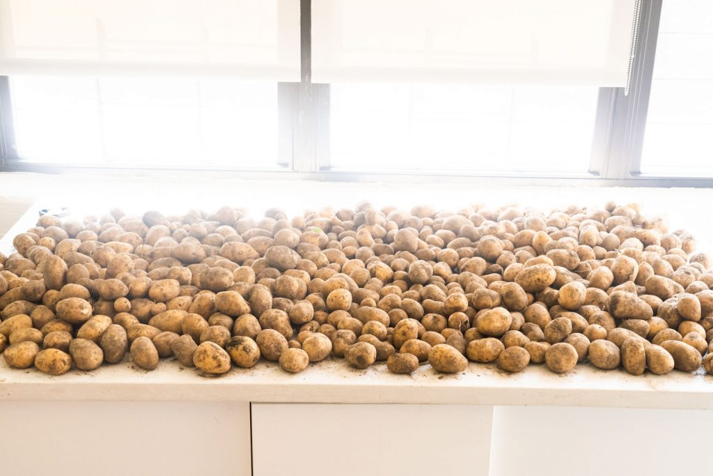 potatoes laid out on white table with windows in background