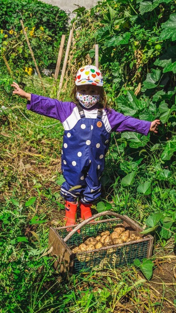 little girl wearing mini rodini digging up potatoes in the garden