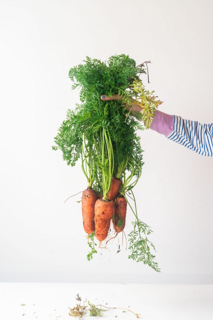 arm wearing striped shirt holding carrots with green tops still attached
