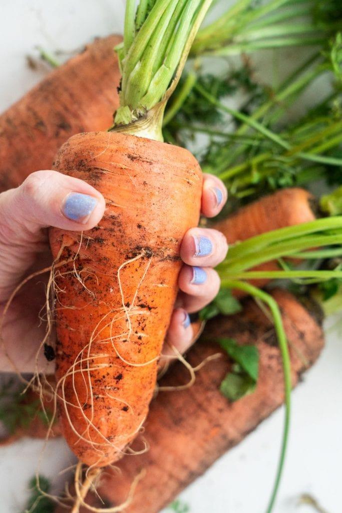 blue finger nails on hand holding big carrot