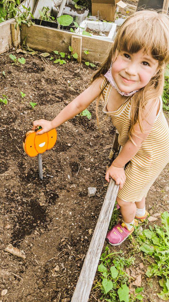 little girl pushing garden stake into the garden bed.