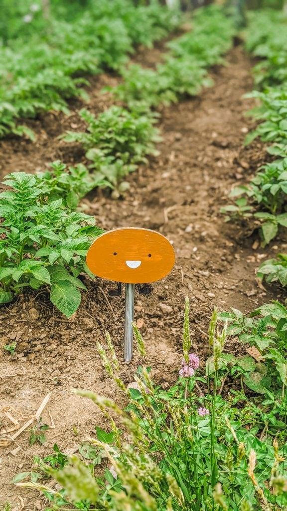 cute potato sign in garden.