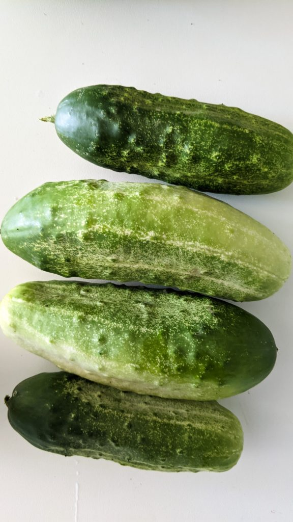 four cucumbers on white table.